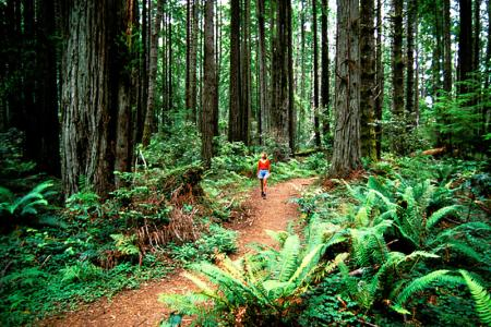 mendocino hiking trails