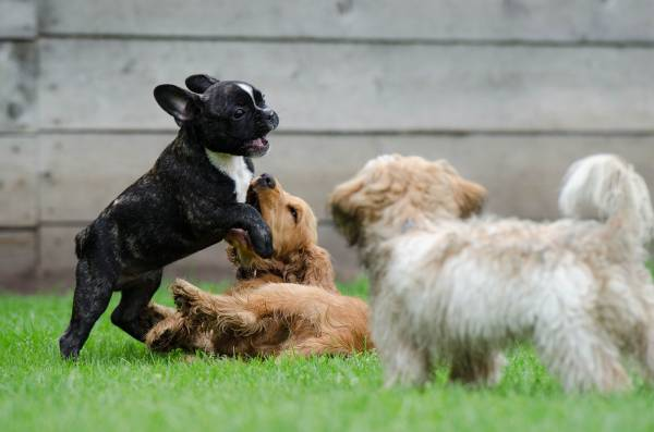 dogs playing in a field