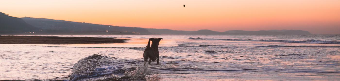 pet friendly mendocino coast